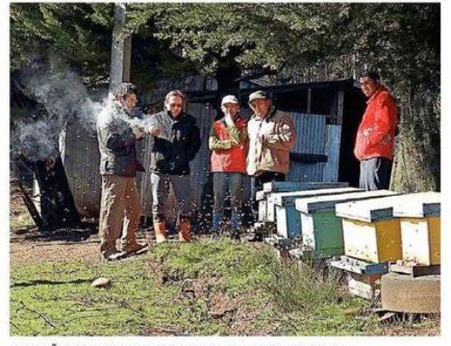 Autoridades recorren la Ruta de la Miel en la Región con el fin de potenciar el rubro