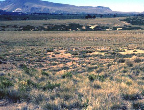 Reserva Nacional Alto Biobío