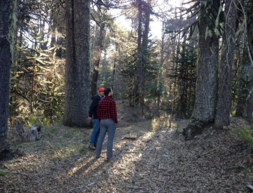 Turismo Mapuche Rutas Ancestrales – Curarrehue