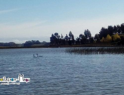 Turismo Mapuche Budi Lafken Mapu – Saavedra