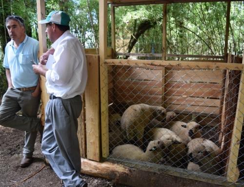 Campesinos de #Villarrica se aprestan para ofrecer lo mejor de sus productos en verano