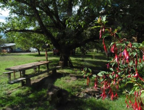 Turismo Rural Wenüy – Curarrehue