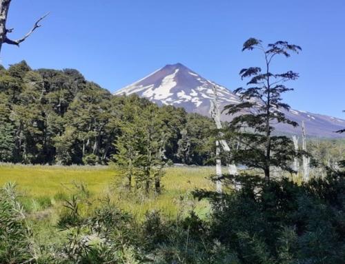 Más de 60 mil hectáreas de escenario natural: 70 años cumple Parque Nacional Conguillío