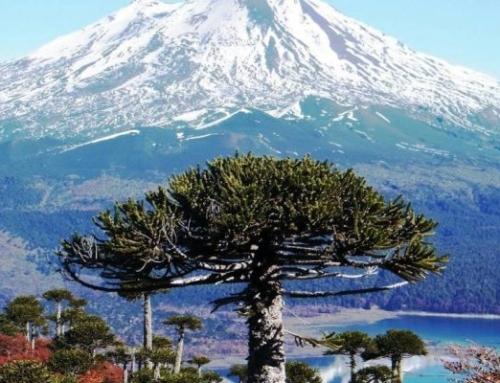Desafío Descubre Araucanía selecciona 8 proyectos para potenciar el turismo en la región