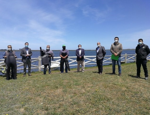 Pequeños acuicultores de La Araucanía reciben trajes de buceo para cultivo de choro maltón