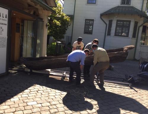 CONAF halla y recupera embarcación de la cultura mapuche sumergida en Laguna Torca