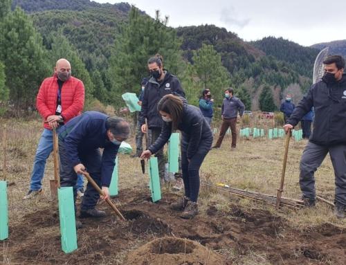 Lanzan proyecto por la recuperación ambiental de la Reserva Nacional Malalcahuello