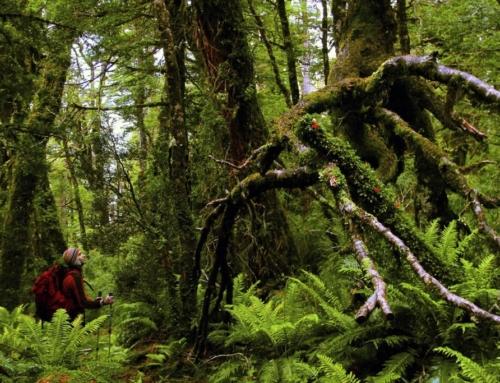 Conguillío se suma a inédito proyecto que promueve el turismo sustentable en Chile