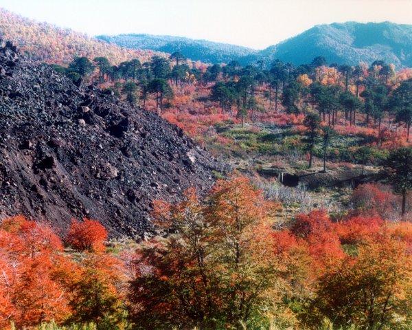 Reserva Nacional Nalcas
