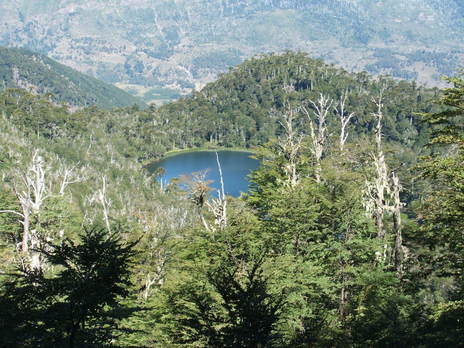 Reserva Nacional Villarrica o Hualalafquén