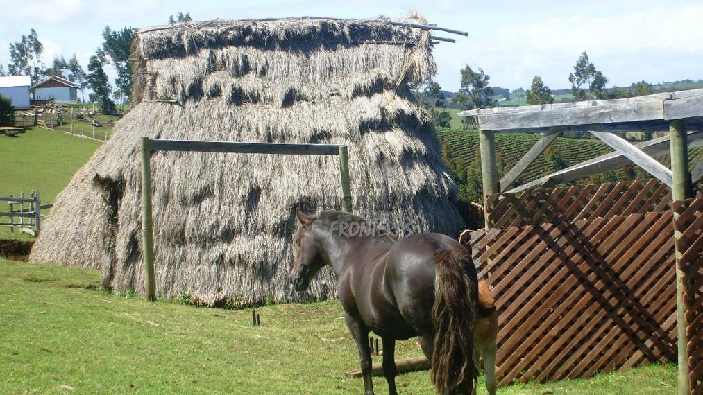 Turismo Mapuche Hospedaje Ad Lewfu – Teodoro Schmidt