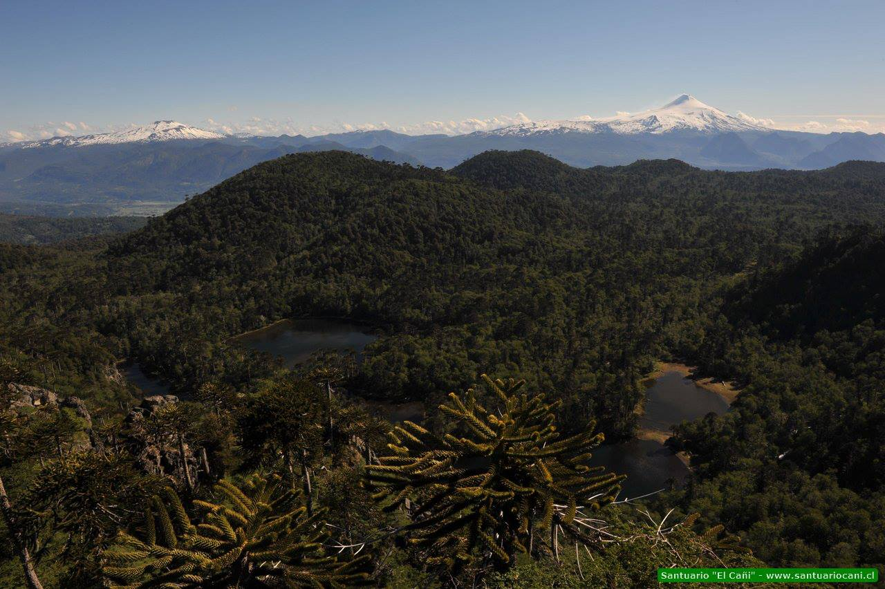 Conoce Santuario El Cañi: ejemplo de conservación, educación y turismo